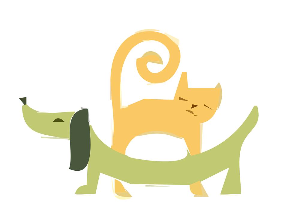 zvieratka